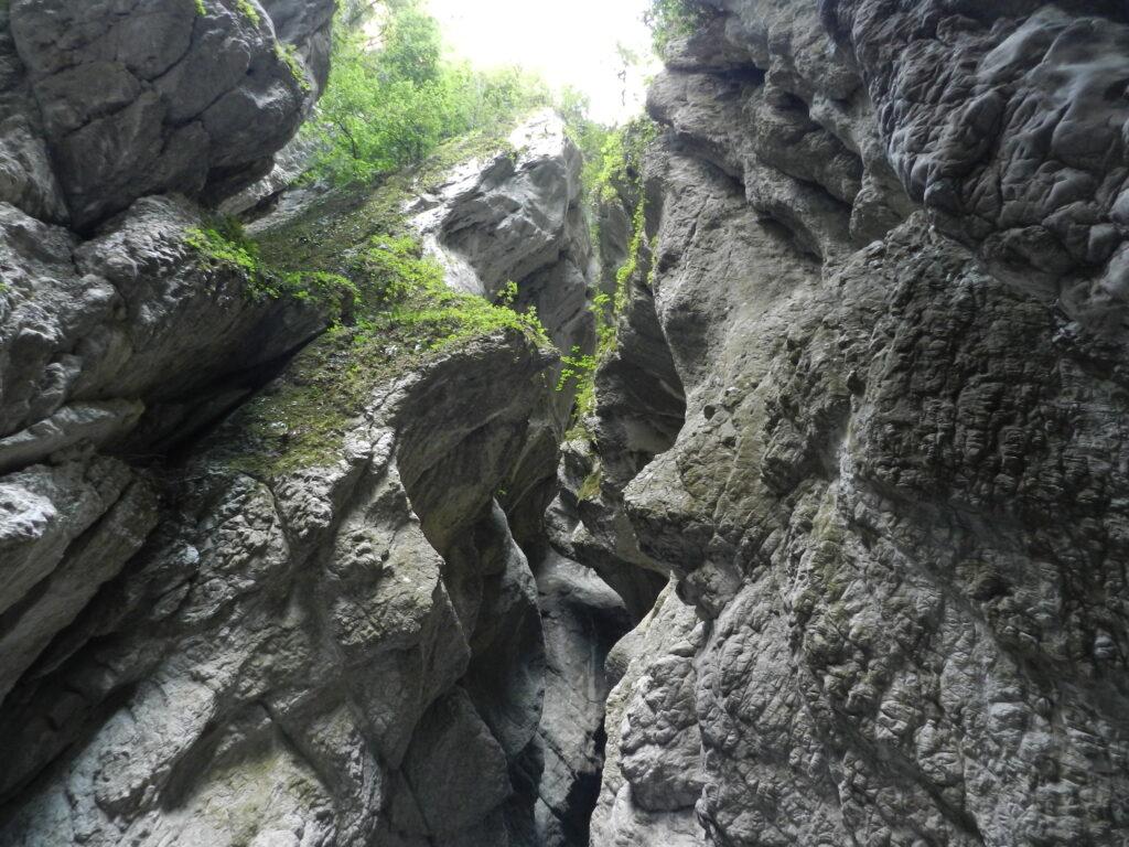 Canionul Holtes